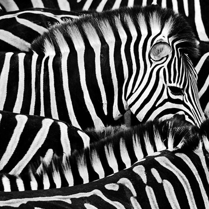 2. Black & White by Ibrahim Ahmed