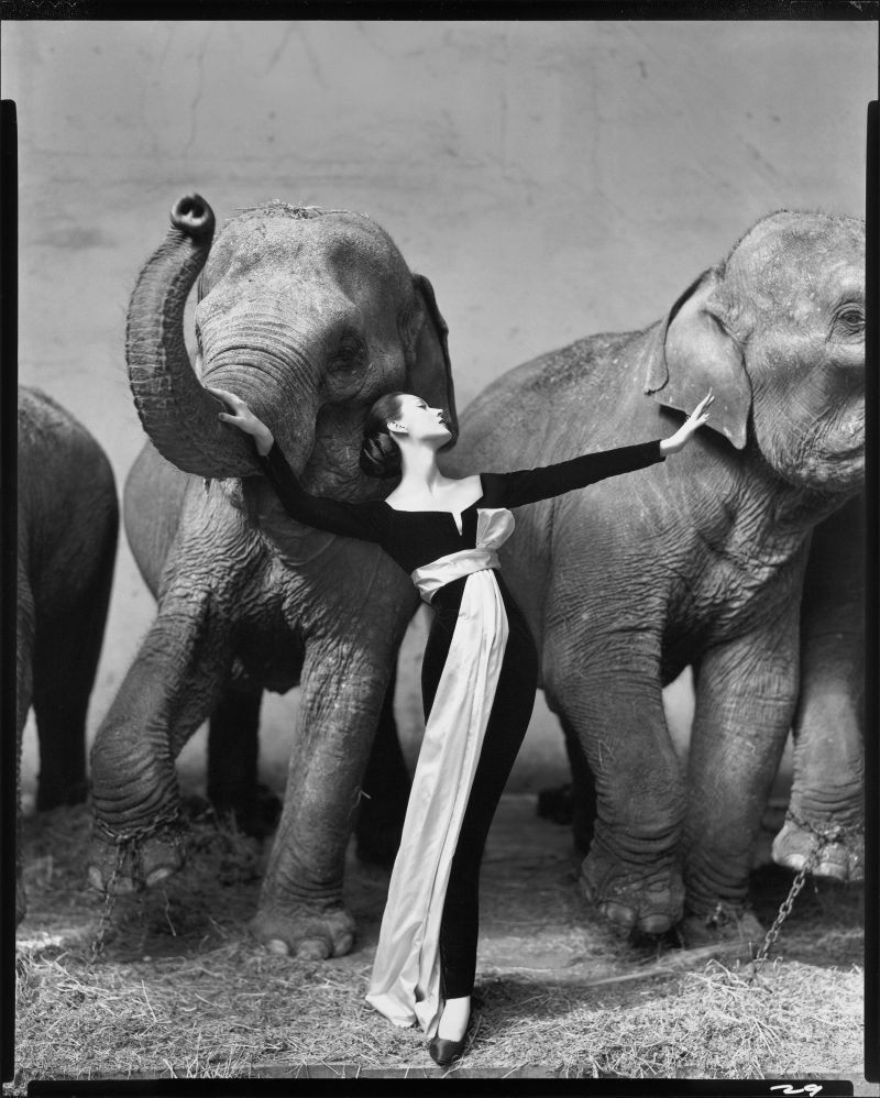 Richard Avedon Dovima with Elephants