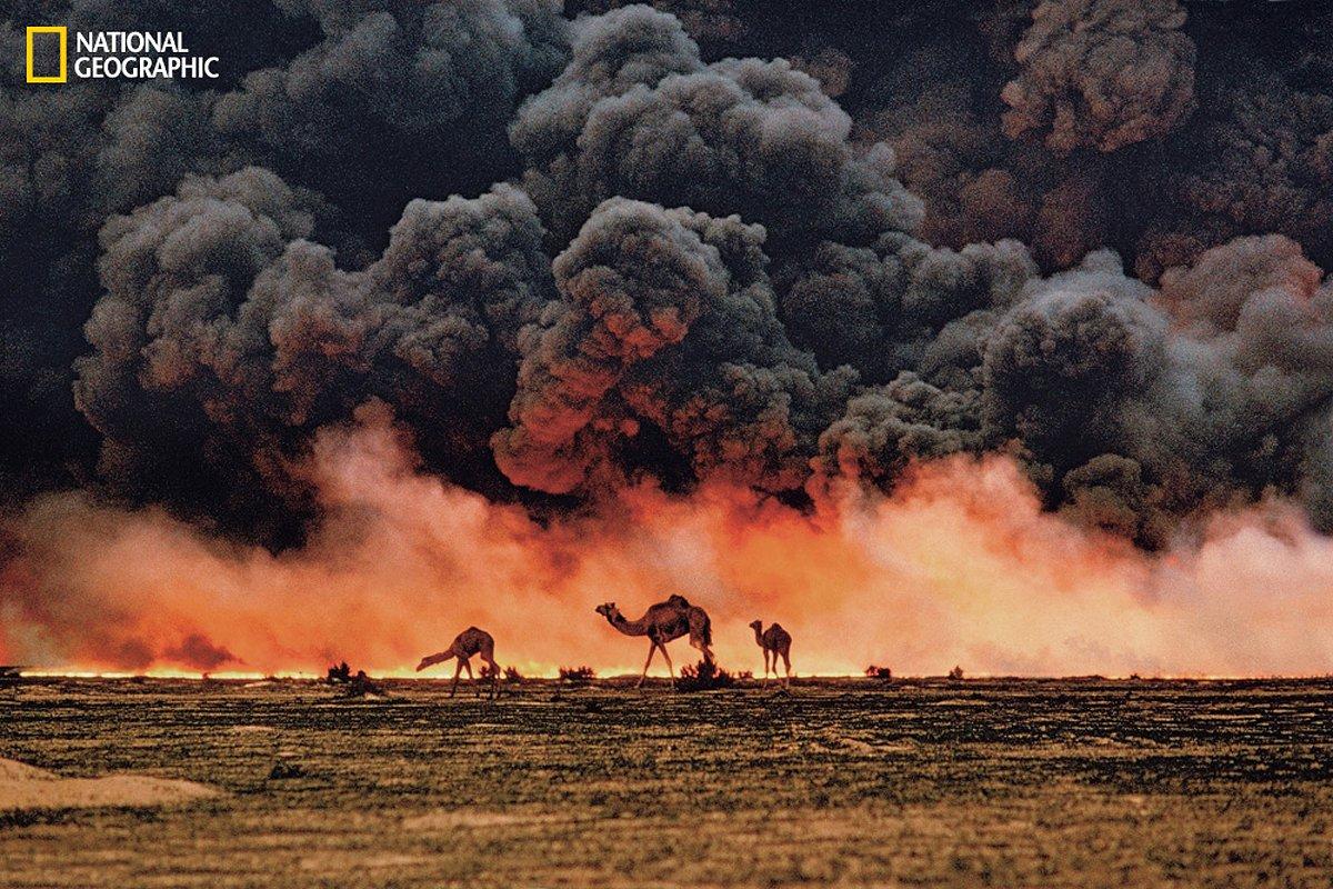 Верблюды ищут пропитание и воду на юге Кувейта, в то время как над ними повисли чёрные облака от горящей нефти. Снято Стивом Мак-Карри в 1991 году, во время войны в Персидском заливе