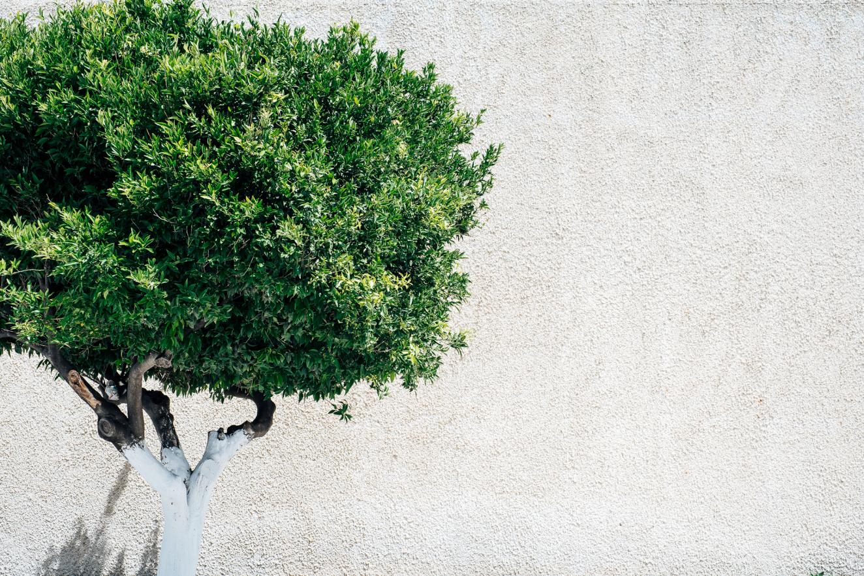 Обзор Fujifilm X-T100 от Йонаса Раска