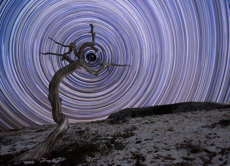 Зсохшее можжевеловое дерево в северных Скалистых горах Монтаны