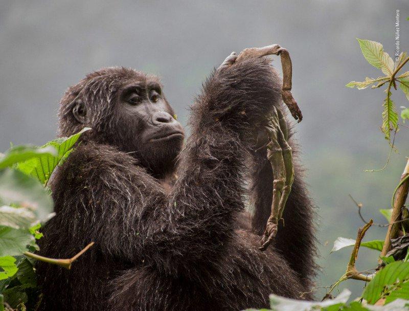 Фото-победители конкурса Wildlife Photographer of the Year 2018