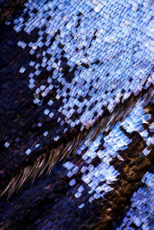 Макроснимки крыльев бабочки из 2100 отдельных кадров