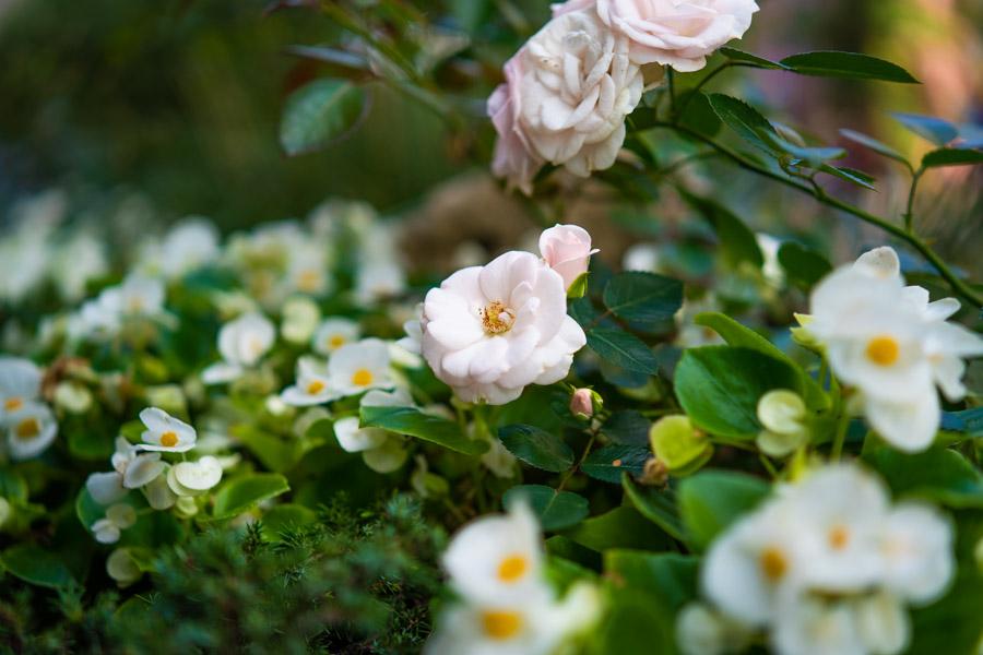 Samyang AF 45mm F1.8 FE пример цветы